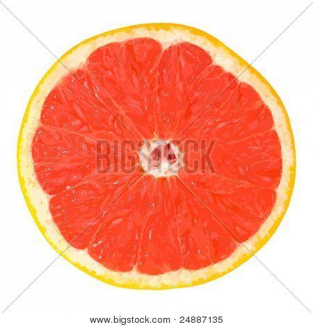 Vector Grapefruit