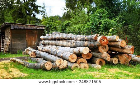 A Pile Of Wooden Logs On The Green Grass In The Courtyard Of A Country House. A Felled Beech In A Pi