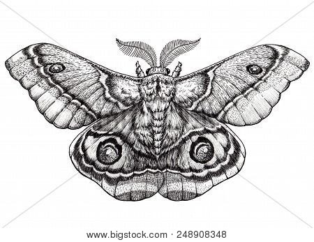 Butterfly Tattoo Art. Dotwork Tattoo. Antherina Suraka. Madagascar Bullseye Moth. Mystical Symbol Of