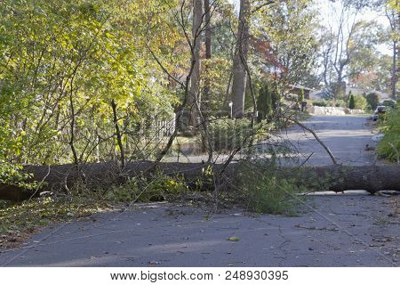 A Storm Brings Down A Large Tree And Utility Wires Across A Neighborhood Road Blocking Access And Pr