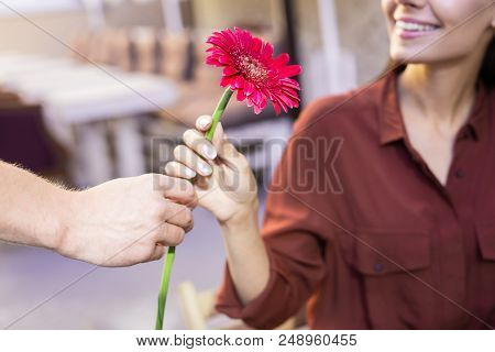 Contended Woman. Young Beaming Woman Feeling Contended Smiling Broadly While Receiving Flower From B