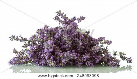 Flowering Medicinal Plant Lavender Isolated On White Background