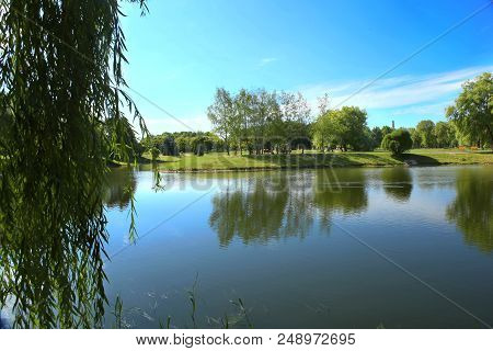 City Park Pond In Summer. Scenic View Of Pond And Park Through Willow Branches.