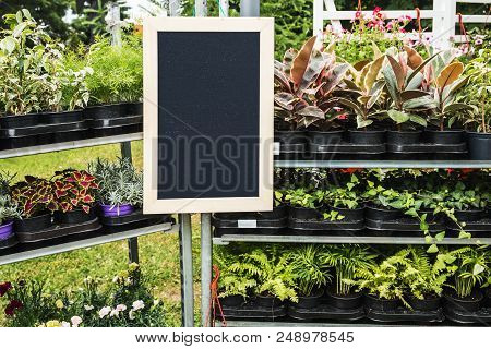 Seedlings Of Plants In Pots For Planting. Decorative Flowers And Plants And Black Board For Text