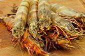 big fresh tiger prawns king prawns shrimp poster