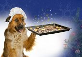 Dog with a chef´s hat is offering christmas cakes poster