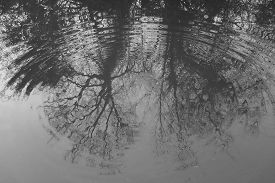 Ripple In Water Reflecting An Image Of Tall, Bare Trees. Traditional High Contrast Black And White W