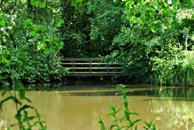 Old Wooden Bridge Partly Hidden By Thick Leafy Green Trees, Seen Across A Pond With Out-of-focus Pla