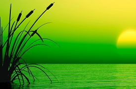 Water plants at sunset - - 3D rendering