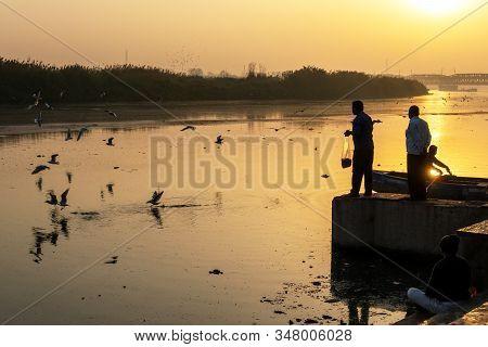New Delhi, India - March 04, 2018: Man Feeding Siberian Gulls At Yamuna River. The Siberian Gulls Is