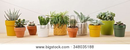 Collection Of Various Succulents And Plants In Colored Pots. Potted Cactus And House Plants Against