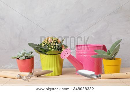 Collection Of Various Succulents And Plants In Colored Pots And Gardening Tools. Potted House Plants