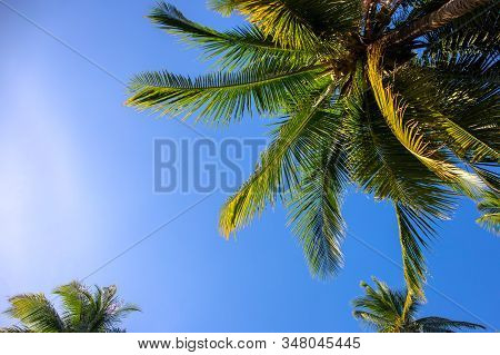 Sunny Palm Tree On Blue Sky Background. Tropical Island Nature. Optimistic Coco Palm Tree Landscape.