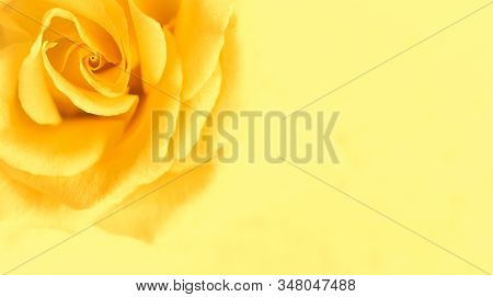 Botanical Concept, Wedding Invitation Card - Soft Focus, Abstract Floral Background, Yellow Rose Flo
