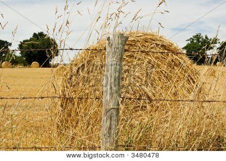 Hay Bale In Summer