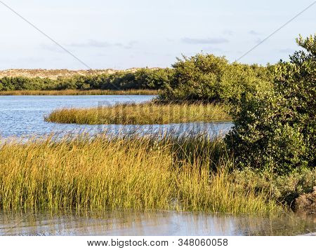 Marsh In Anastasia State Park In St. Augustine, Florida Right At Golden Hour, A Beautiful Nature Lan