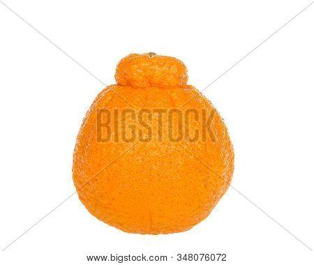 One Large Sumo Orange Isolated On White Background. Native To Japan, Sumo Oranges Are A Hybrid Citru