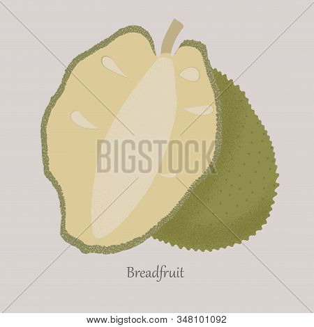 Breadfruitl Exotic Juicy Fruit Whole And Cut.