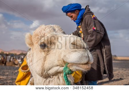 Merzouga, Morocco On February 24, 2018: Camel With Local Berber Guide In Sahara, Merzouga, Morocco