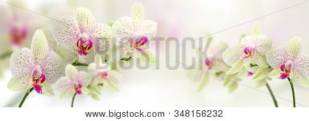 Vintage Color Orchids In Soft Color And Blur Style For Background