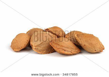 Apricot Stones