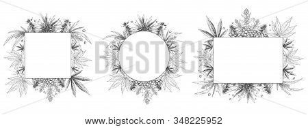 Hemp Frame. Hand Drawn Cannabis Plant, Sketch Hemp Leaf And Marijuana Seeds Frames Vector Set. Bundl