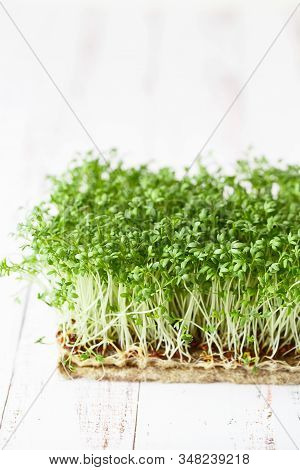 Watercress Salad Microgreens, Green Leaves And Stems. Sprouting Microgreens. Seed Germination At Hom