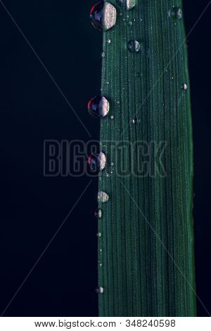 A Moody Dark Macro Portrait Of A Few Water Droplets Hanging On The Side Of A Blade Of Grass. There I