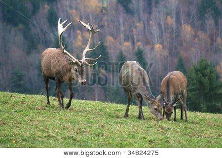 group of deer on autumn background.
