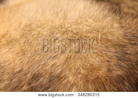 Abstract Background Of Mixed Breed Dog Fur Close Up. Domestic Animal Wool. Large Or Medium Sized Poo