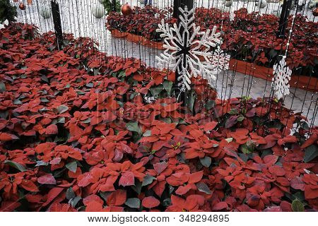 Season Of Christmas Decoration In Outdoor Park, Stock Photo