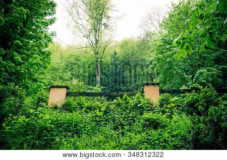 Trees With Green Leaves On Branches In Thick Dense Foliage Forest Wood Near Karlovy Vary (carlsbad)