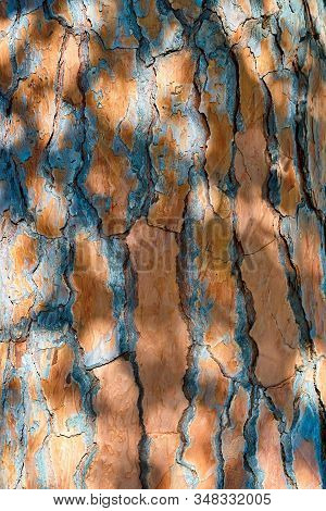 Abstract And Spotty Wood Bark Texture With Shadow
