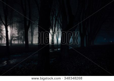 Dark And Spooky Foggy Forest At Night