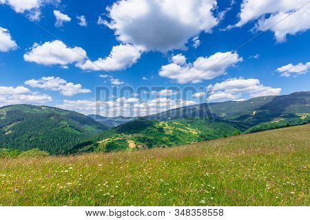 Mountain Meadow With Wild Herbs And Green Grass. Wonderful Summer Scenery At High Noon. Forested Hil