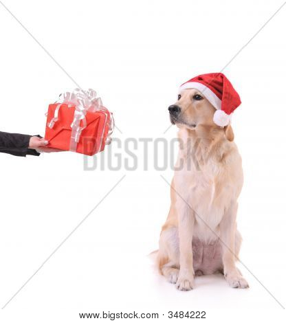A Gift For My Dog