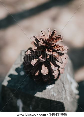 Close Up And Image Of Dry Pinecone On Wood Stump Against Blurred Background