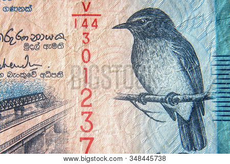 Sri Lanka Currency Close Up. Macro View Of 50 Rupees Bill. Detail Of Srilankan Banknote With Flycatc