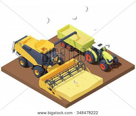 Vector Isometric Combine Harvester And Tractor At Harvest. Combine Loading Wheat Harvest In Trailer.