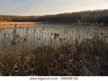 Frozen Grass By Lake Near Ervenice Village In Czech Landscape In Winter On 21Th January 2020