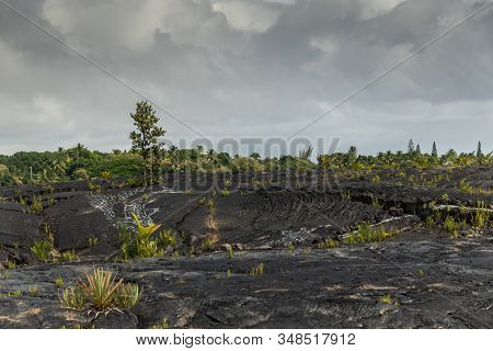 Kaimu Beach, Hawaii, Usa. - January 14, 2020: Green Vegetation With Lone Tree On Top Of Hardened Bla