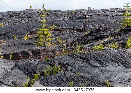 Kaimu Beach, Hawaii, Usa. - January 14, 2020: Hardened Into Waves, Black Lava Field Off Kilauea Volc