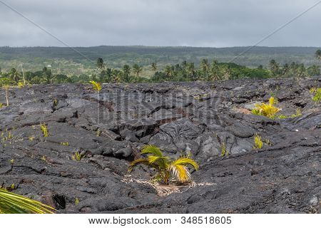 Kaimu Beach, Hawaii, Usa. - January 14, 2020: Hardened Black Lava Field Off Kilauea Volcano Eruption