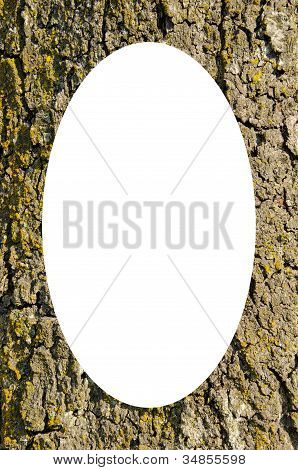 Trunk Closeup Frame And Isolated White Oval