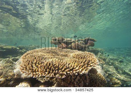 Tropical Coral Reef Underwater