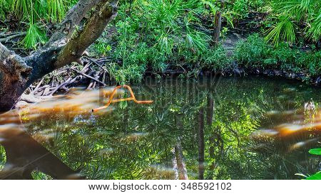 Reflections Of Trees And Sunlight In A Small Swimming Hole In A Bushland Setting