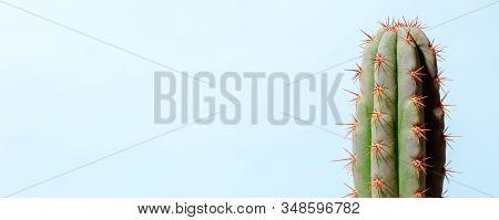 Cactus On Blue. Art Gallery Fashion Design. Minimal Stillife. Concept, Copy Space, Summer Vacation H