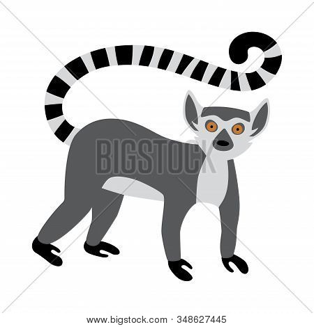 Cute Funny Ring-tailed Lemur. Exotic Lemur Catta. Vector Illustration In Flat And Cartoon Style Isol