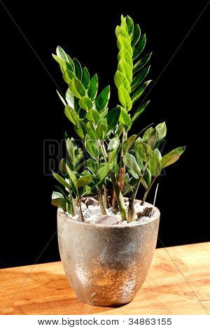 green plant in the pot