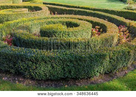 Hedges And Ornamental Trimmed Shrubs Of Boxwood Planted In Spirals Shape With Clipped Flat Tops On T